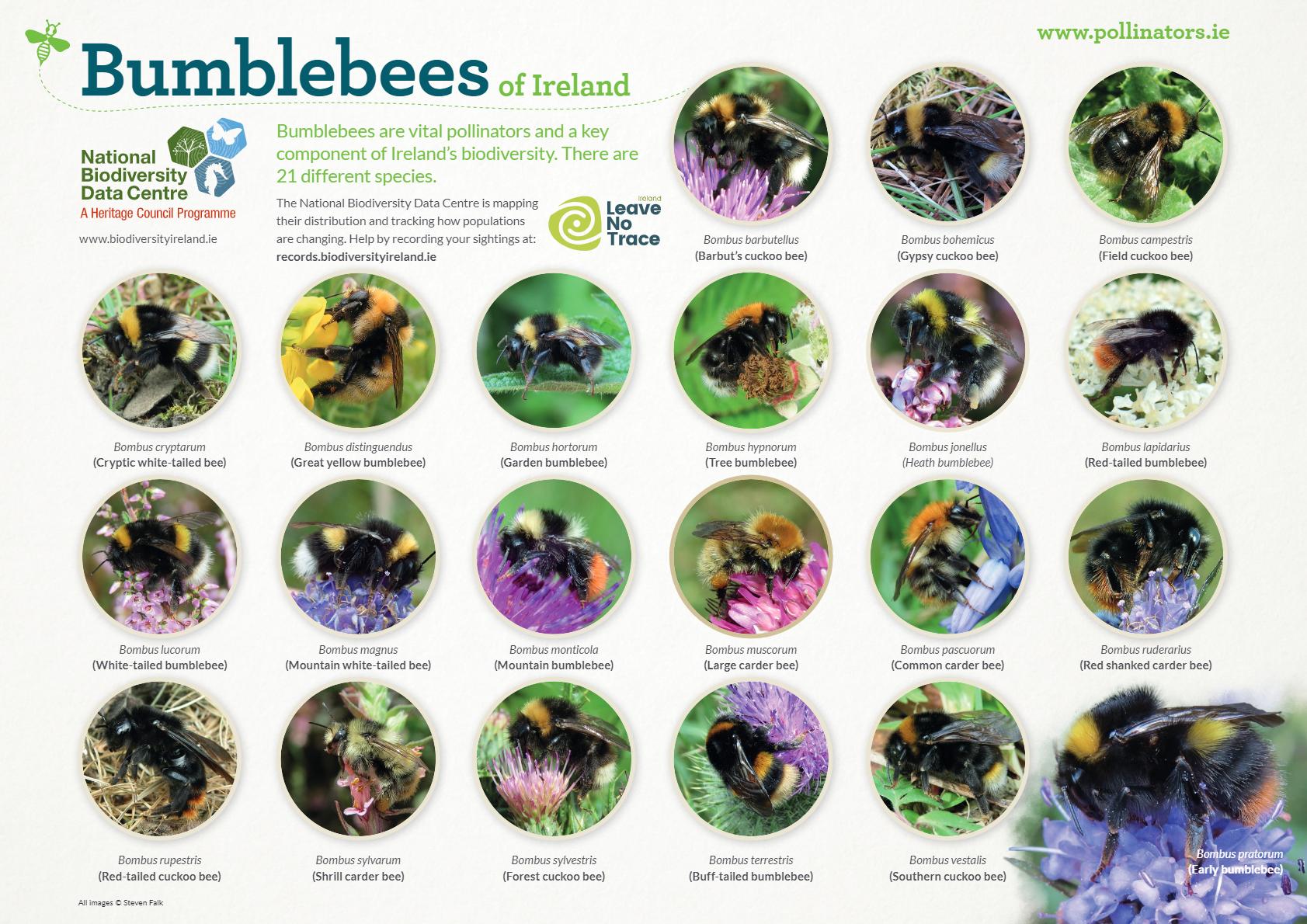 Bee Identification Poster