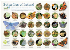 Butterfly Identification Poster