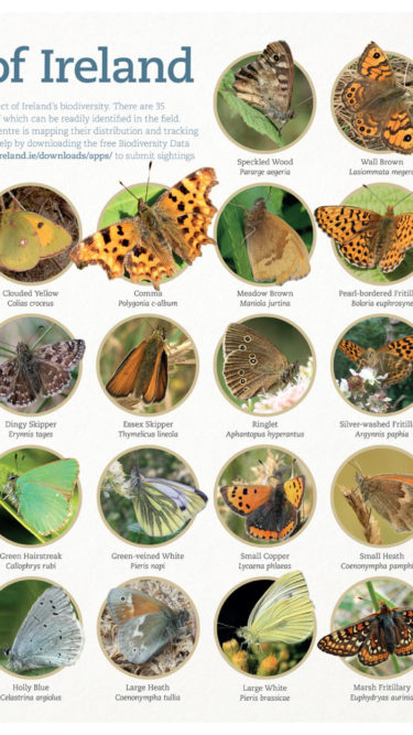 Butterfly Course